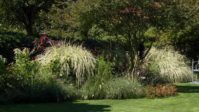 Bild Salathé Rentzel Gartenkultur