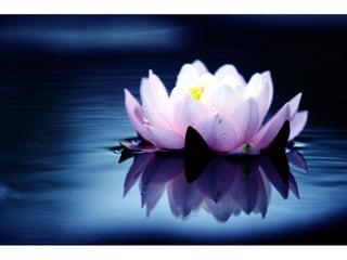 Bild lotus-massagen