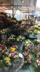 Photo Blumen & Pflanzen
