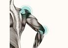 Bild Fisioterapia Nosetto Bellinzona