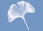 Immagine Praxisgemeinschaft für Naturmedizin