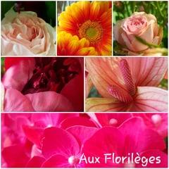 Immagine Aux Florilèges